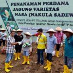 Archi Indonesia Topang Penanaman Jagung Unggulan Nasa 29
